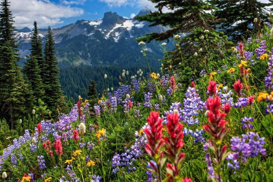 Fond ecran gratuit printemps paysage fonds d 39 cran hd for Paysage gratuit