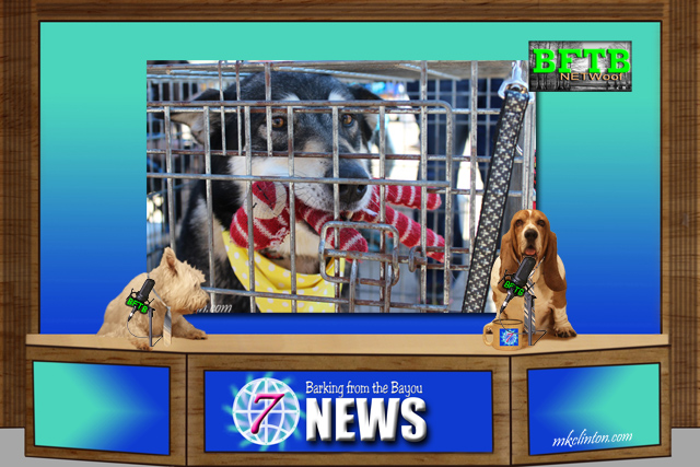 BFTB NETWoof News reports on pet rescue efforts in Houston