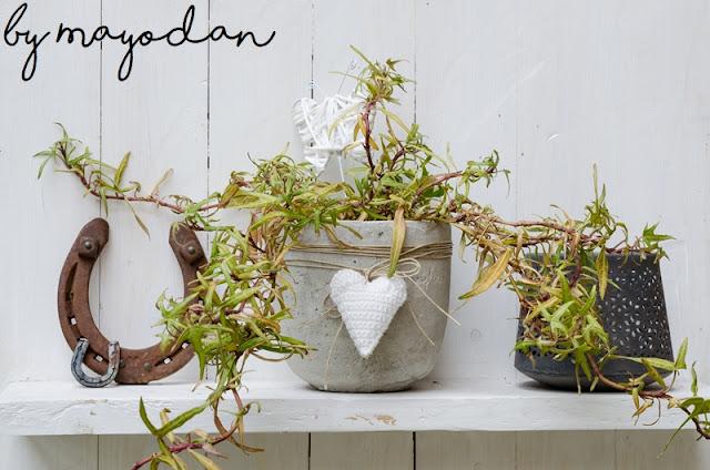 Dekoration Pflanzen