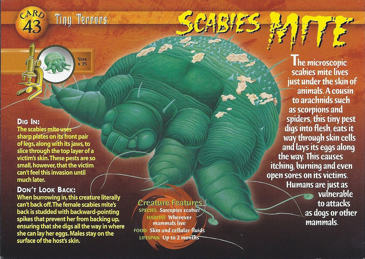 World Hospital: Scabies