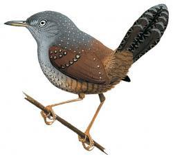 aves amenazadas de Argentina