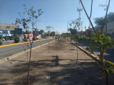 Leon Mexico reforestation greening mapping GIS trees planting restoration ecology urban