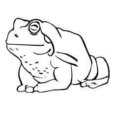 Best Coloring Pages For Kids: Toxic Frog Coloring Pages Animals