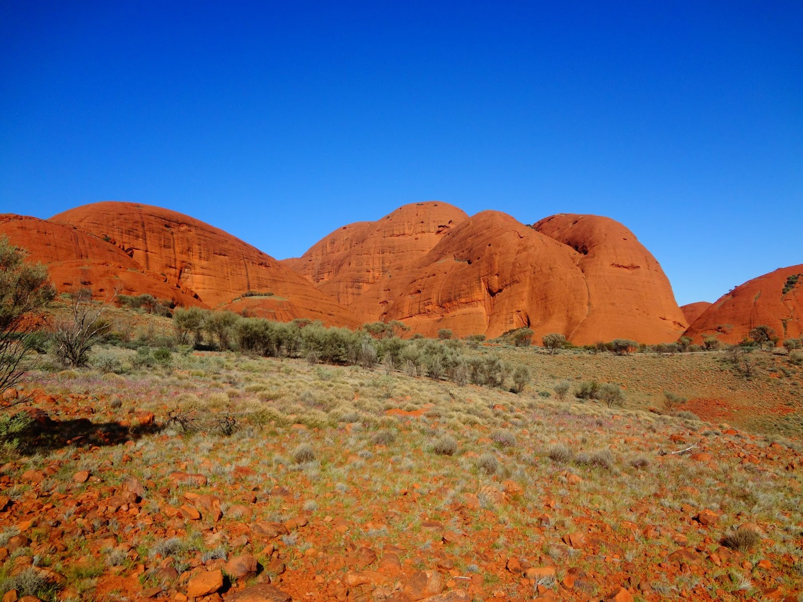 outback - photo #15