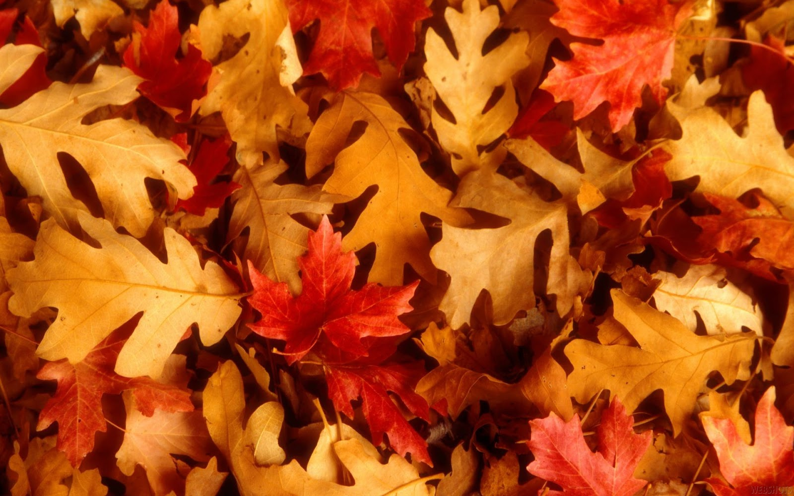 Labels: Red Autumn Leaves Photography HD Wallpapers for ...