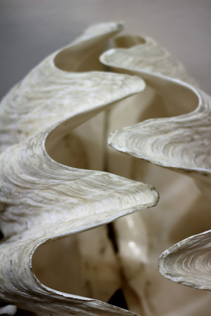 Seashell Museum Sanibel