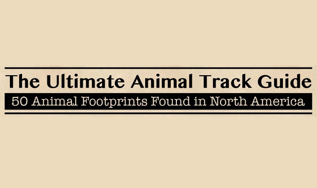 The Ultimate Animal Track Guide