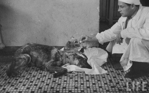 O cientista que fazia experiências com animais vivos