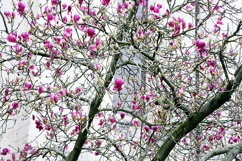 Spring blooms in the Loire Valley, France