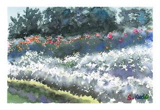 バラ園の水彩画 千葉県習志野市の谷津バラ園 豚毛の筆を使って描いています