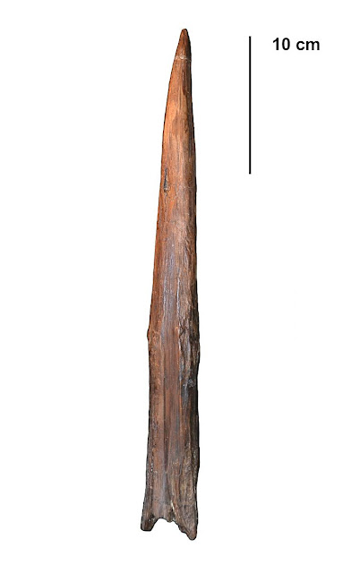Neanderthal hunting spears could kill at a distance