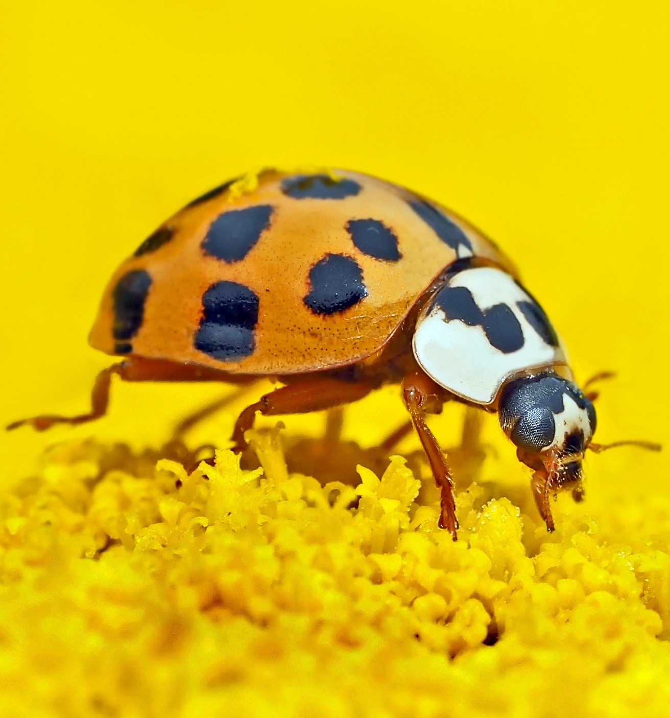 Up close photo of ladybug.