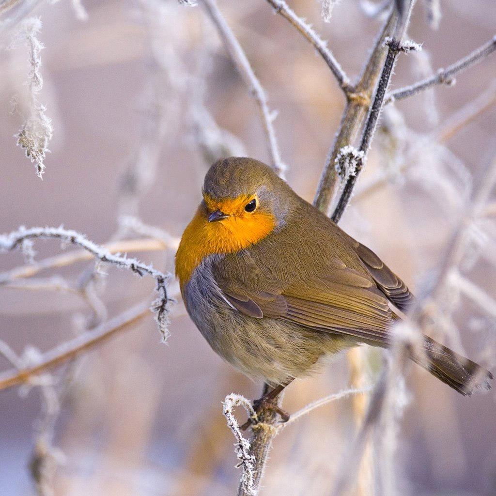 Winter bird images - photo#47
