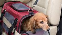 Pet Road Trips: Research Shows Summer Travel Plans and Habits of Pet Parents