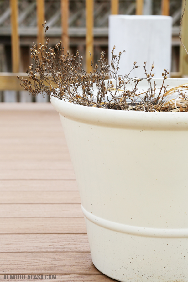 Remove dead plants from planters and garden