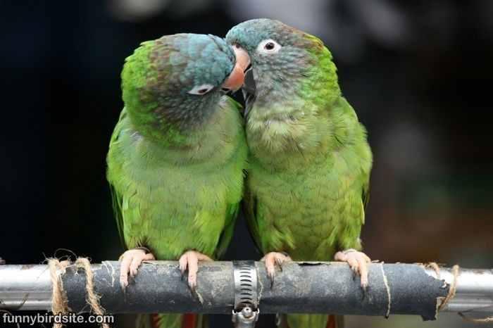 Free Funny PhotoS: Funny Birds