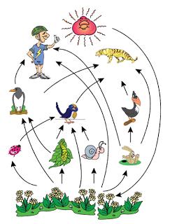 Contoh Kompetisi Dalam Ekosistem : contoh, kompetisi, dalam, ekosistem, GENOS,