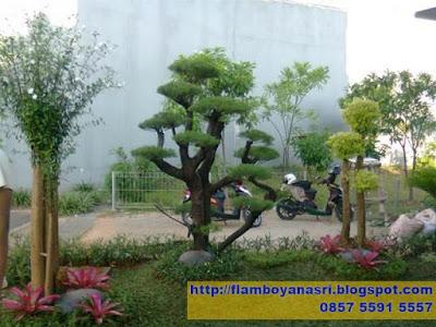 Tukang Taman Surabaya Taman Minimalis Tanaman Anting Putri