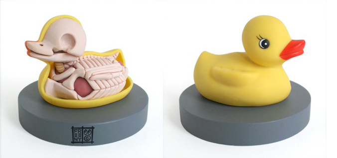 dissected rubber duckie