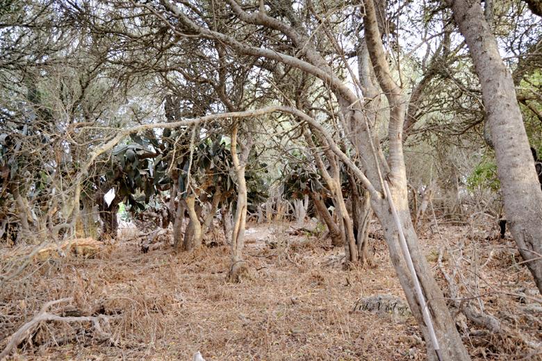 Es sorprendente este antes y después de un bosque, sí, veremos la transformación y acondicionamiento que hicimos de un bosque para realizar en él una boda