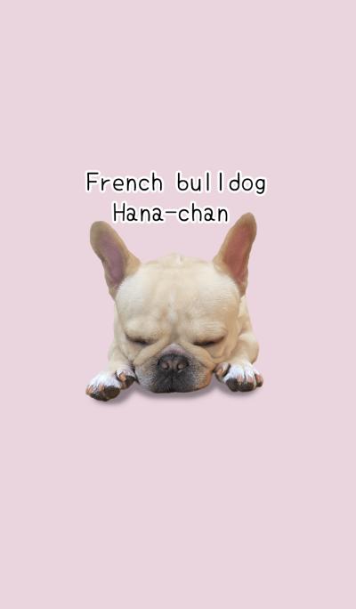 French bulldog Hana-chan