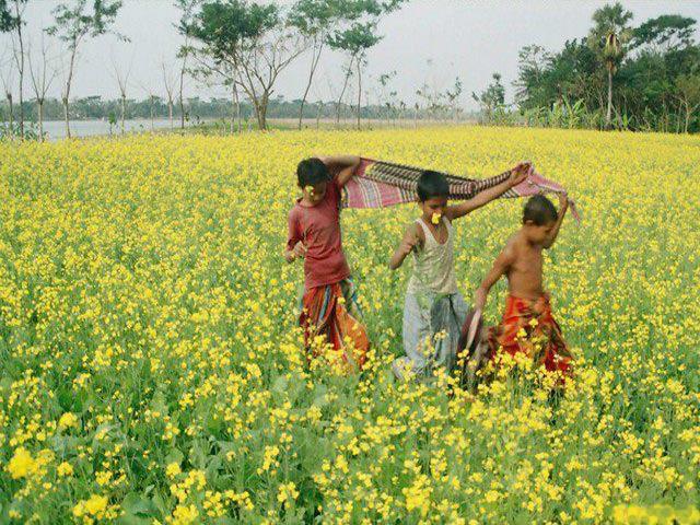 Nature Natural Beauty Of Bangladesh