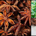 Help Protect The Body's Health With Star Anise