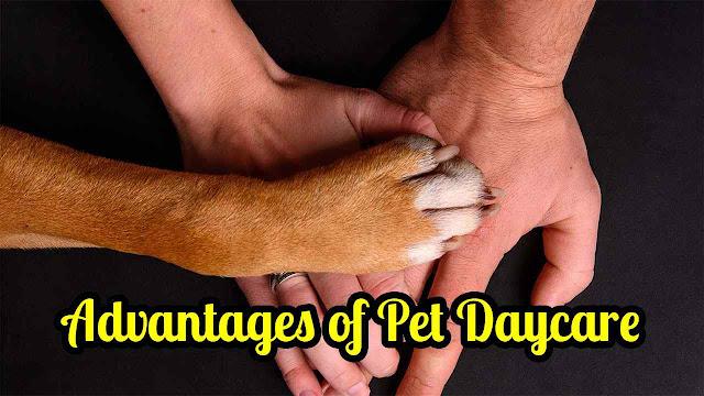Advantages of Pet Daycare