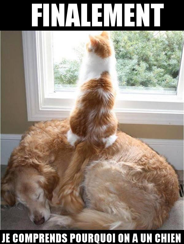 Image Drôle du Net: Ce chat a vu l'utilité d'un chien