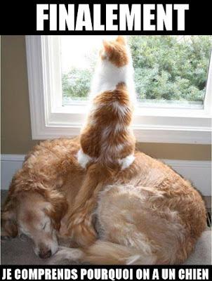 image marrante chien et chat