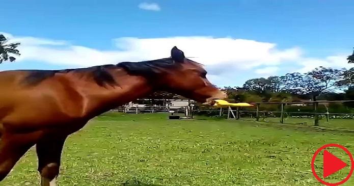 Horse vs. Rubber chicken