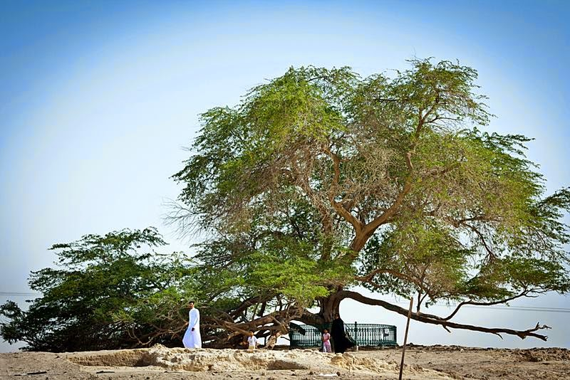 Sharajat-al-Hayat, 'Tree of Life' (Shara al-Hayat) - 400-year-old mesquite growing in Bahrain, 2 kilometers from the hill Jabal Dakhan (Jabal ad Dukhan, 'Smoke Mountain').