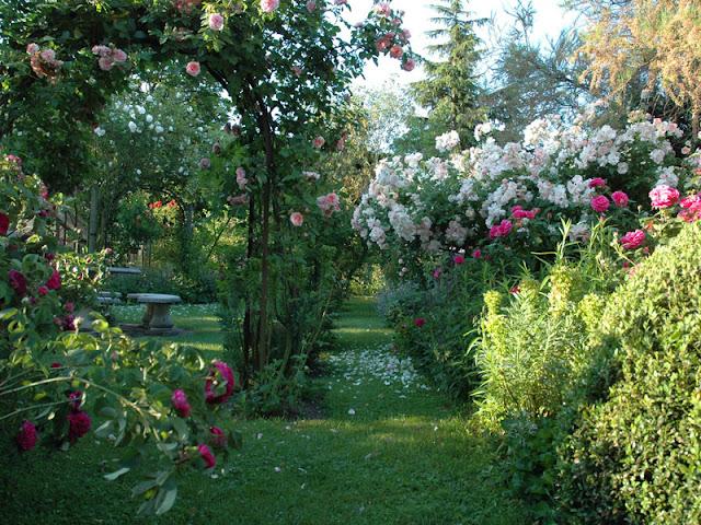 Promesse de roses for Le jardin 69008 lyon