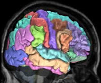 First Comprehensive Gene Map of the Human Brain