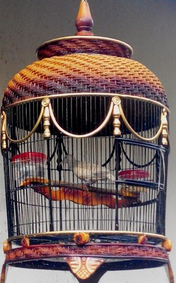 Daftar Harga Sangkar Burung Perkutut Biasa Termurah Dan Terlengkap Kicau Mania