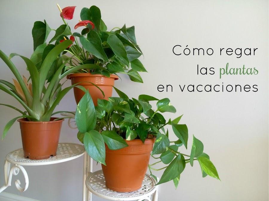 Como-regar-las-plantas-en-vacaciones