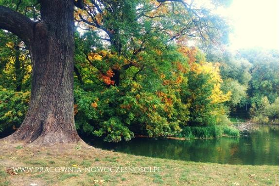drzewo i jezioro