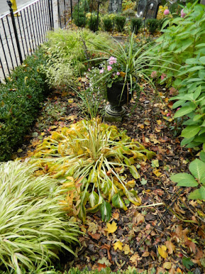 Cabbagetown Toronto front garden makeover before by Paul Jung Gardening Services