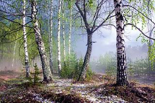 Сочинение лес весной
