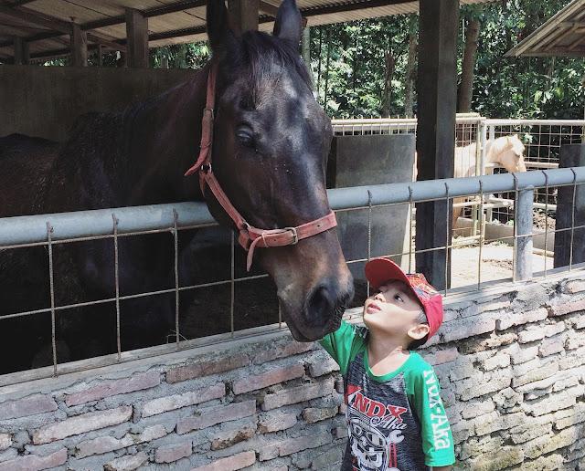 Kandang kuda di Taman Botani Sukorambi