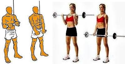 Ejercicios para subir de peso curl bíceps extensión tríceps