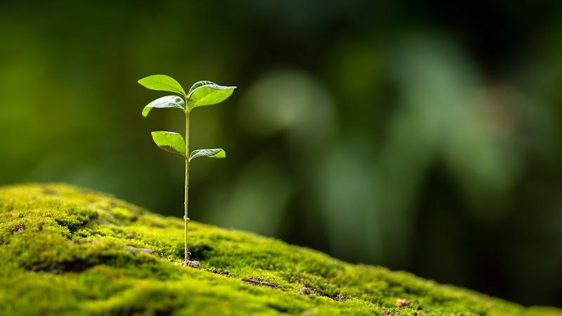 Qué es un nicho ecológico