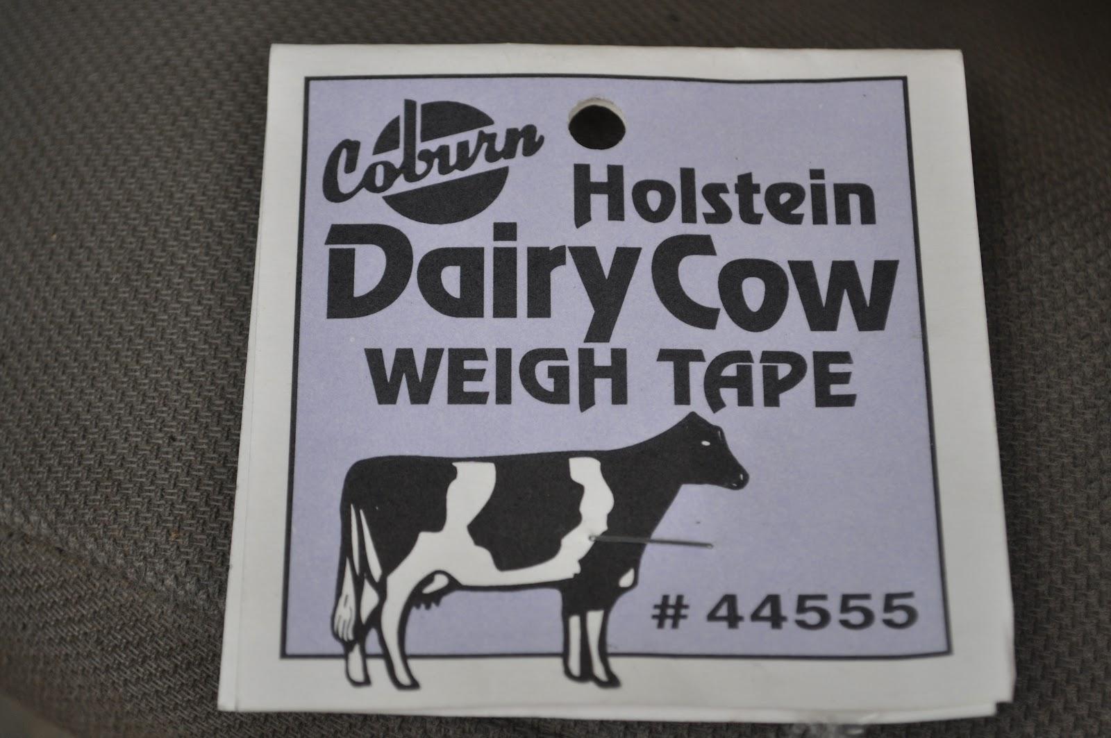 Holstein Dairy Cow Weigh Tape
