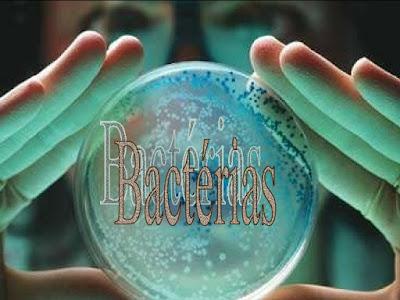 Bactérias: introdução