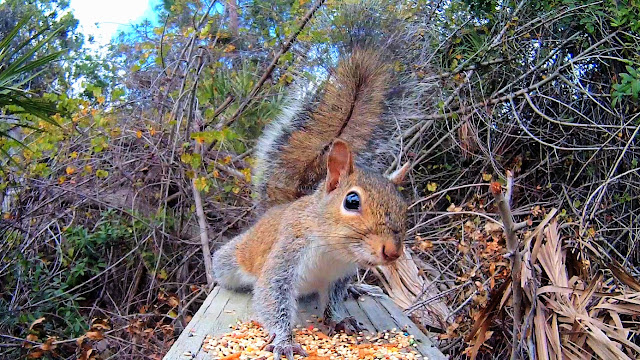 Squirrel Freaked Out By Camera