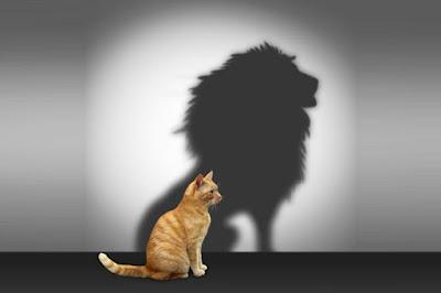 Özgüven, Çelişki, Kişilik, Çekingenlik, Kedi ve aslan, Aslan ve kedi