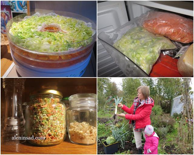 сушка, заморозка, хранение в свежем виде, лука порея, аленин сад, огород, овощи, лук порей, лук-порей