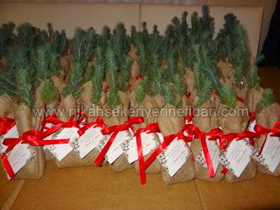 nikah fidanı nikah bitkisi fiyatları 6