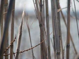 Bamboo Tigakli Salt Pan