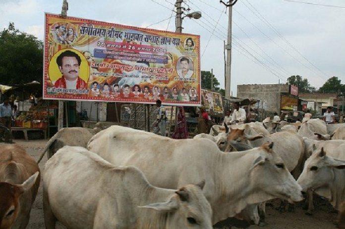 India Terbitkan Larangan Menyembelih Sapi Bagi Muslim, Hukumannya Penjara Seumur Hidup